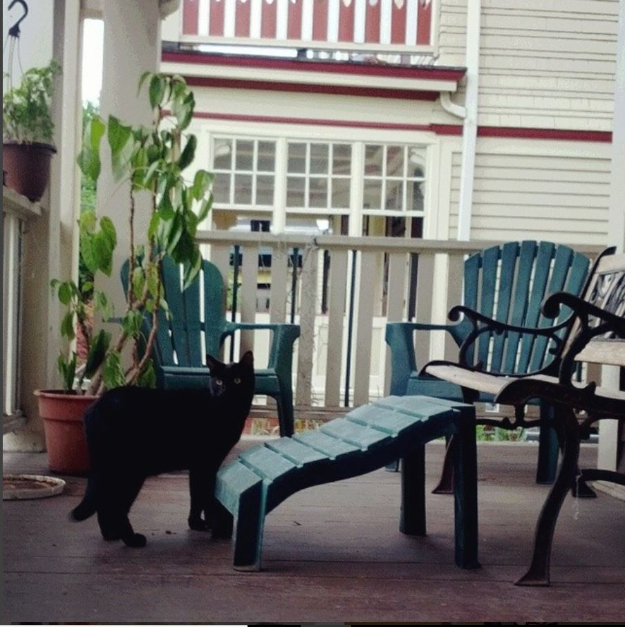 A Cat named Trouble on Porch